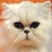 Lolacat 1.1 APK