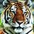 Animal Puzzle 1.0.5 APK