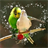 Bird WallPaper 1.0 APK