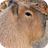 Capybara Wallpapers 1.0 APK