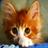 Cat licks screen Wallpaper 1.0 APK