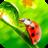 Ladybug Video Wallpaper HD 7.0 APK