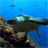Sea Turtle Live Wallpaper 7.0 APK