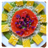 Raw Vegan Recipes icon