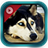 Dogs Tube icon