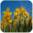 Spring HD Wallpapers 1.0 APK