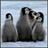 Arctic Penguin 1.0.1 APK