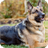 German Shepherd Dog Pack 2 Live Wallpaper 1.30