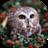 Owls live wallpaper 3.0