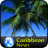 Caribbean News 1.0 APK