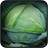 Cabbage Wallpapers 5.0