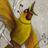 L'Oiseau de feu 7.0 APK