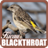 Kicau Blackthroat 1.1 APK