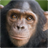 Chimp live wallpaper 1.6 APK