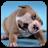 Cute Puppies Video Wallpaper 2.0 APK