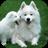 Dog Live Wallpaper 1.1 APK