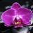 Orchid Live Wallpaper 1.30 APK