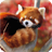 Red Panda Live Wallpaper 1.30