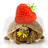 Tortoise And Tiny Pancakes Live Wallpaper icon