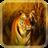 Wild Tigers Live Wallpaper icon