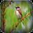 bird wallpaper 4.3.2 APK