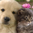 cat and dog wallpapers 1.1 APK
