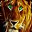 Flashing lioness 1.0 APK