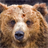 grizzly bear wallpapers 1.1 APK