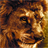 lion backgrounds 1.1 APK