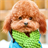 live poodle wallpaper 1.1