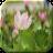 Lotus Flower 1.3 APK