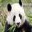 Panda Wallpapers 1.0 APK