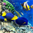red sea fish live wallpaper icon