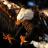 Hawk Live Wallpaper 1.1 APK