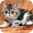 Exotic Shorthair Cats Wallpapers 1.0 APK