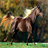 Runing Horse Live Wallpaper 1.1