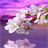 White Flowers Branch LWP 2 APK