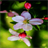 White Red Flowers LWP 2 APK