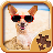 Animal Jigsaw Puzzles for Kids 1.0 APK