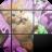 Kucing Comel 1.0