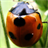 Insect Jigsaw Puzzles 2.9.17