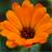 Puzzle Flowers Free 1.0.2 APK