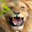 Lion Games LITE 1.0 APK