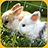 Rabbit Jigsaw Puzzle 1.1 APK