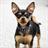 Chihuahuas Dog Jigsaw Puzzle 1.0 APK