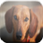 Dachshund Game 1.0 APK