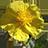 Flores de Bach 1.1.1 APK