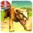 Cougar Simulator 3D 1.0 APK