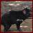 Tasmanian Devils Wallpaper App 1.0 APK