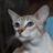 Siamese Cats Live Wallpaper 3.3.0.0